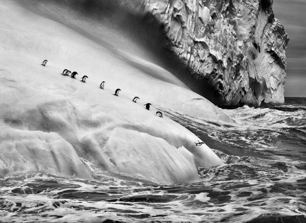 3. Salgado_Chinstrap penguins (Pygoscelis antarctica) on icebergs located between Zavodovski and Visokoi islands